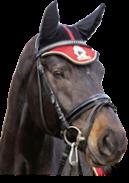 vybavení pro koně